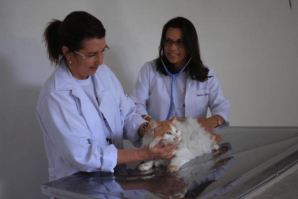Projeto APPA - hospital veterinário - Realiza cerca de 600 atendimentos diários em Santana de Parnaíba e região | contato@appapetsp.org.br