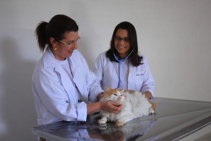 4. Associação Paulista de Proteção Animal