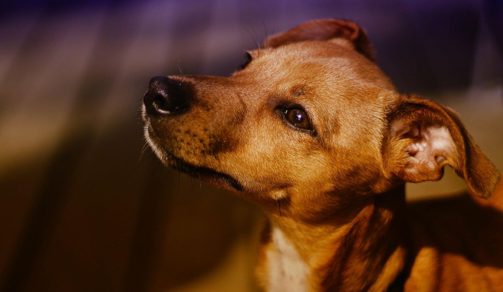 Shopping Tamboré recebe Feira de Adoção de cães e gatos neste final de semana